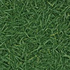 Bingo Grass 25